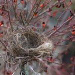 Dealing with Empty Nest Syndrome : A Very Major Life Transition!