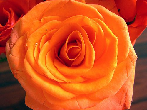 rose as symbol in jungian psychotherapy