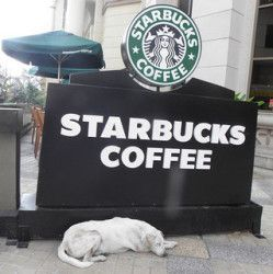 dog-at-starbucks
